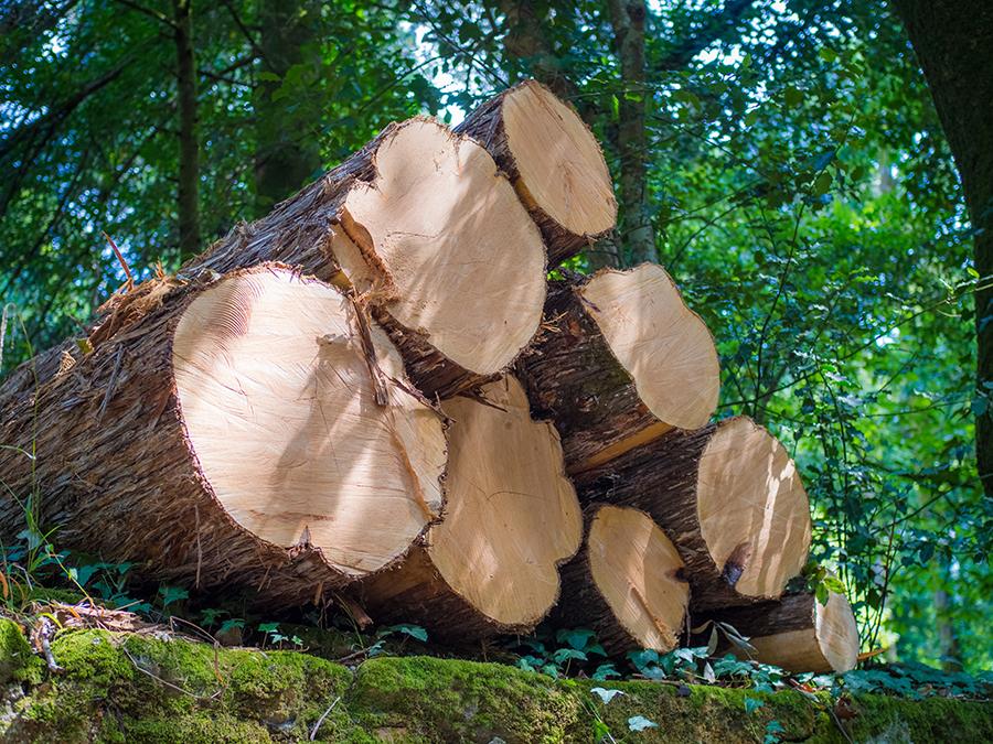 Będą zmiany w sprzedaży drewna